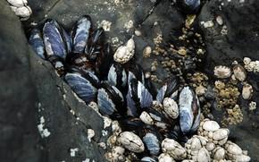 Macro, clam
