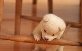 cane, Cane, cucciolo, Cuccioli, animali, cuties, pusechki