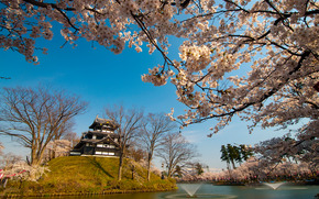 Japan, Fujiyama, castle, park, Sakura, BRANCH, flowering
