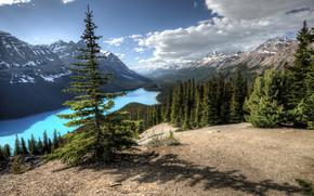 Lago Peyto, Banff, Alberta, Canada, lago, Montagne, alberi, paesaggio