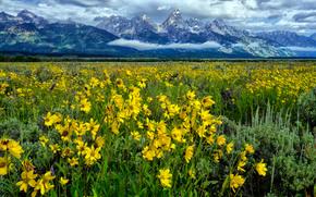 场, 山, 花卉, 景观