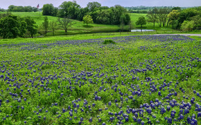 Spring Green, Texas, поле, цветы, река, деревья, пейзаж