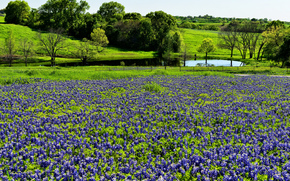 Spring Green, Texas, field, Flowers, river, trees, landscape