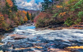 осень, река, лес, деревья, пейзаж