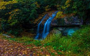 autunno, foresta, alberi, cascata, natura