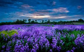 puesta del sol, campo, Flores, paisaje