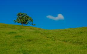 Grant County Park, Santa Clara County, California, USA, hill, tree, landscape