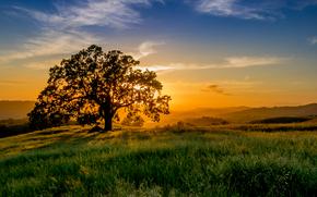 Grant County Park, Santa Clara County, California, USA, закат, поле, дерево, пейзаж
