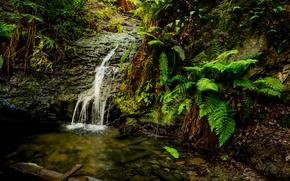 Tiptoe Falls, In Portola Redwoods State Park, California, USA