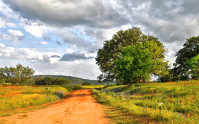 дорога, поле, деревья, цветы, пейзаж