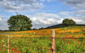 field, Flowers, trees, landscape