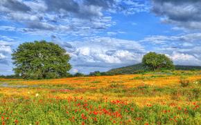 Texas Wildflowers, field, Flowers, trees, landscape