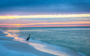 Gulf of Mexico, Blue Mountain Beach, Florida, sunset, sea, shore, lonely heron, landscape