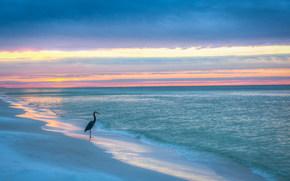 Golfo del Messico, Blue Mountain Beach, Florida, tramonto, mare, puntellare, airone solitario, paesaggio