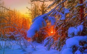 inverno, foresta, alberi, tramonto, nevicata, derive, paesaggio