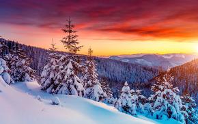 tramonto, inverno, Montagne, alberi, abete rosso, derive, nevicata, paesaggio