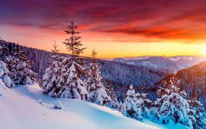 日落, 冬天, 山, 树, 云杉, 漂移, 雪, 景观