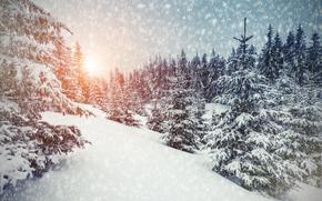 winter, sunset, snow, drifts, trees, landscape