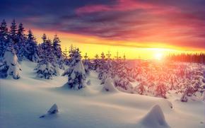 inverno, tramonto, nevicata, derive, alberi, paesaggio