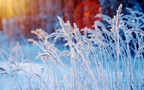 winter, grass, plants, drizzle, frost, Macro