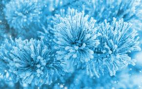 sosna, ODDZIAŁ, Igły, mróz, śnieg, lód, charakter