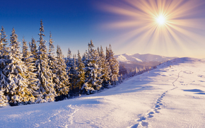 winter, snow, trees, sun, Rays, drifts, traces, landscape