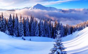 invierno, Montañas, árboles, derivas, nieve, ataviar, paisaje