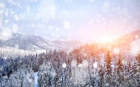 冬, 雪, 木, ドリフト, 風景