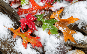 first snow, autumn leaves, nature