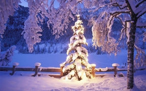 winter, snow, Christmas tree, landscape