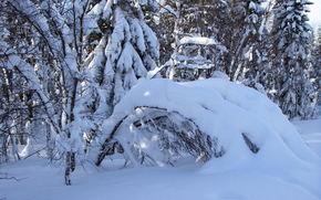 inverno, nevicata, foresta, alberi, derive, natura