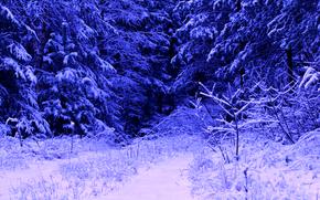 зима, лес, снег, деревья, природа