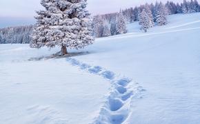 invierno, nieve, derivas, árboles, huellas, paisaje