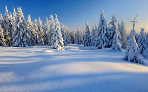 inverno, nevicata, alberi, derive, paesaggio