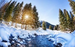 invierno, pequeño río, nieve, derivas, árboles, paisaje