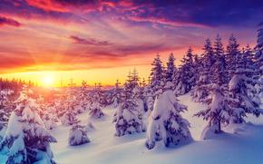冬, 日没, 雪, 木, ドリフト, 風景