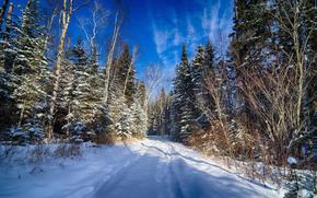 invierno, bosque, carretera, árboles, derivas, paisaje