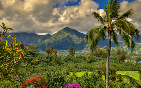 Wyspa Kauai, Wyspy Hawajskie, Góry, drzew, krajobraz