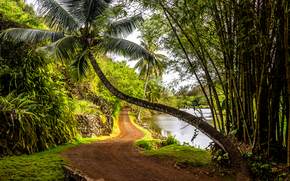 Kauai Island, Hawaiian Islands, road, trees, Palms, landscape