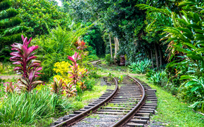 Kauai Island, Hawaiian Islands, railroad, forest, trees, landscape