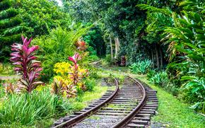 Kauai, Îles hawaïennes, chemin de fer, forêt, arbres, paysage
