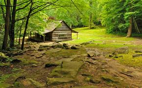 foresta, alberi, radura, cabina, paesaggio