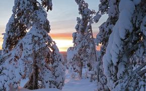puesta del sol, invierno, nieve, árboles, derivas, paisaje