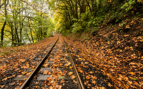 rain, foliage, river, railroad, Mapleton, Oregon, autumn, trees, forest, nature