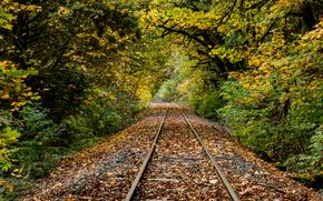 pluie, feuillage, rivière, chemin de fer, Mapleton, Oregon, automne, arbres, forêt, nature