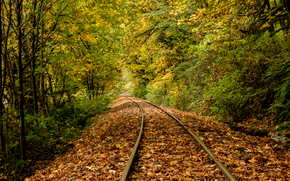 rain, foliage, river, railroad, Mapleton, Oregon, autumn, trees, forest, nature
