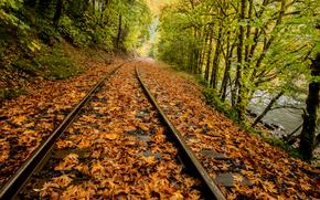 Дождь, листья, река, железная дорога, Мейплтон, штат Орегон, осень, деревья, лес, природа