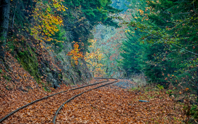 railroad, forest, trees, autumn, foliage, nature