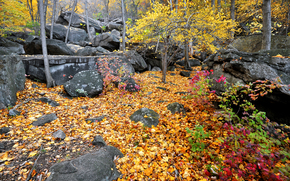Bear Mountain State Park, autumn, forest, trees, stones, nature