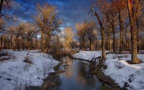 winter, small river, snow, trees, landscape